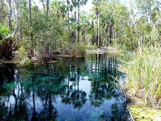 The Mataranka Springs